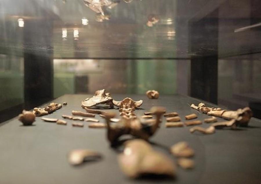 Lucy l'australopithèque 41 ans de sa découverte