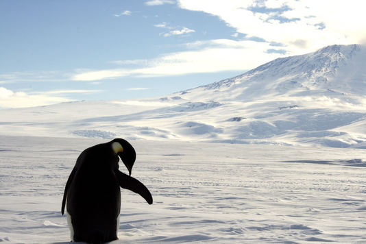 Antarctique