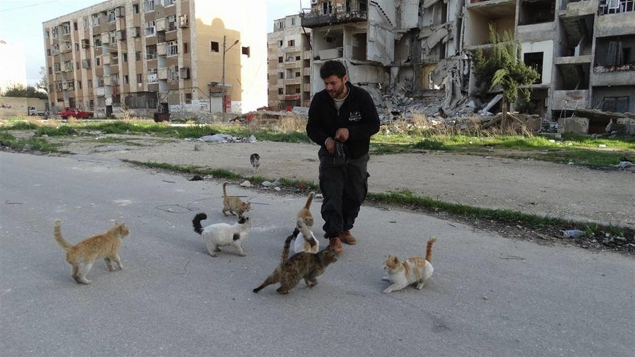 Syrie chats Alep guerre