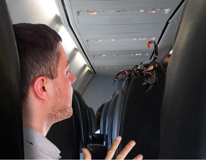 Un passager d'un vol United Airlines piqué par un scorpion