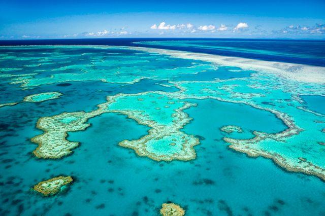 La barrière de corail est en train de mourir