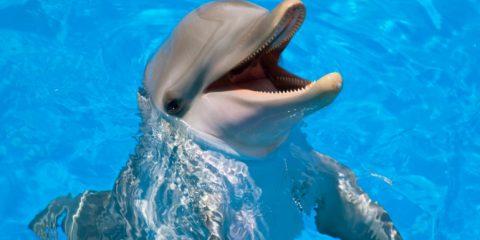 Une startup travaille sur une intelligence artificielle qui pourrait comprendre le langage des dauphins