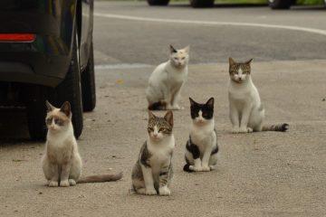 Près de Narbonne deux cents chats sont victimes d'un tueur en série