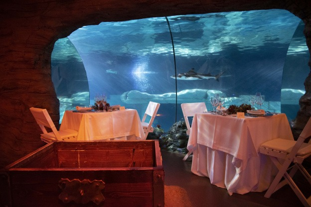 "alt=""Aquarium Sea Life Paris pour la Saint-Valentin"""