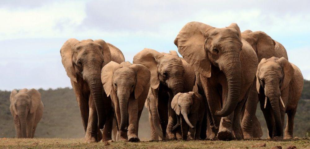 Photo d'éléphants de Botswana
