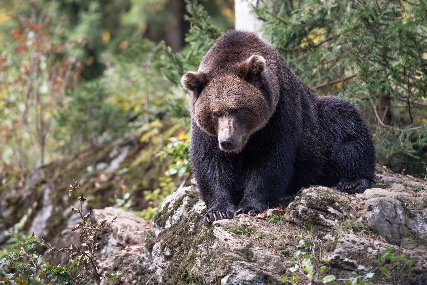 Photo d'un ours