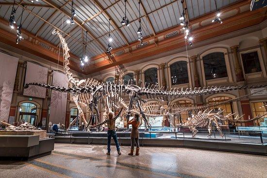 Photo de squelette de dinosaures