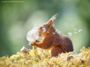 Un écureuil qui fait un vœu