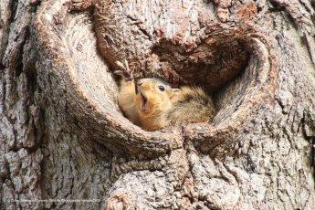 Un écureuil sortant de son sommeil comme sil tenait un stand de foire