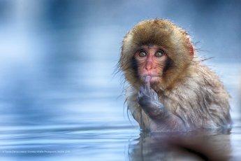 Un petit singe avec un air bien malicieux