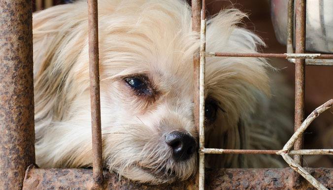 Chien victime de maltraitance animale